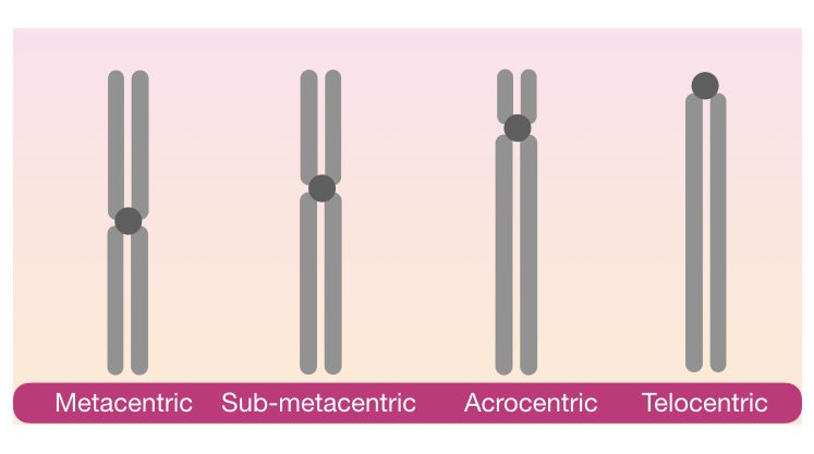 Classification of chromosomes based on the location of centromere.