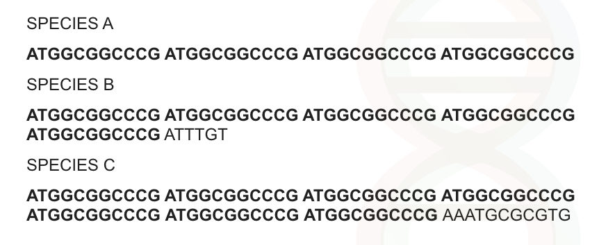 The sequence of the VNTR marker occurs one after another.