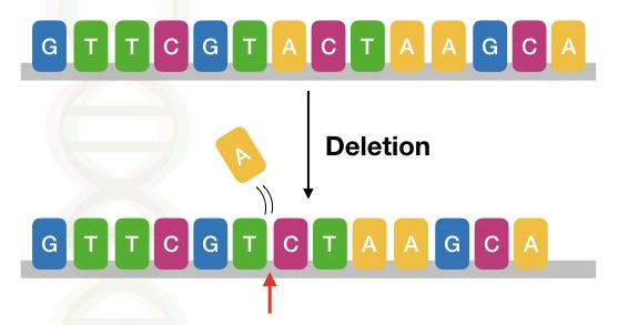 The image shows the type of deletion mutation in a DNA sequence.