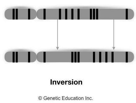 Different type of genetic mutations