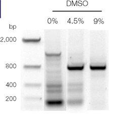 DMSO a PCR enhancer: Role of DMSO in PCR