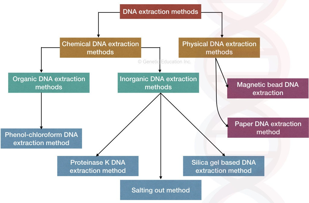 Proteinase K DNA extraction method