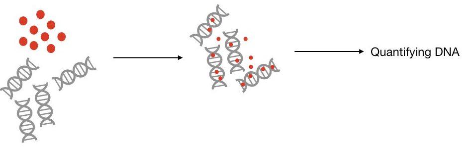 A comparative review between Qubit vs Nanodrop