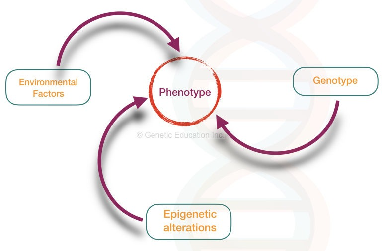 What is a genotype?- definition, frequency and methods