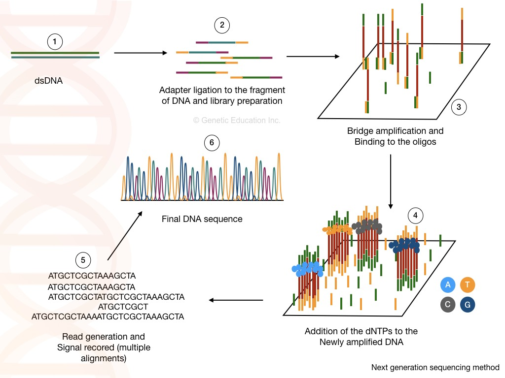 The process of next generation sequencing