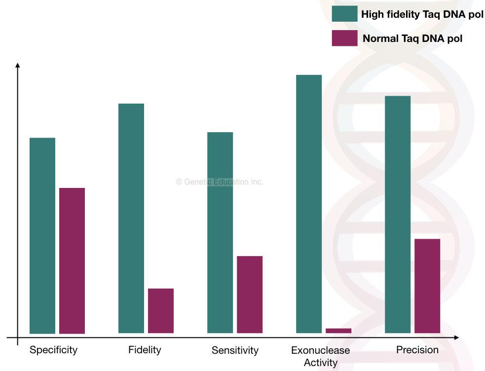 The comparison between normal and fidelity Taq DNA polymerase.