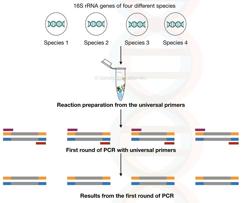 What is nested PCR?