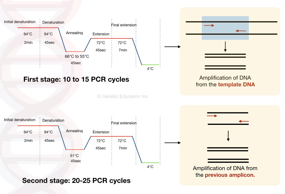 Graphical representation of first stage and second stage PCR cycles and related amplifications