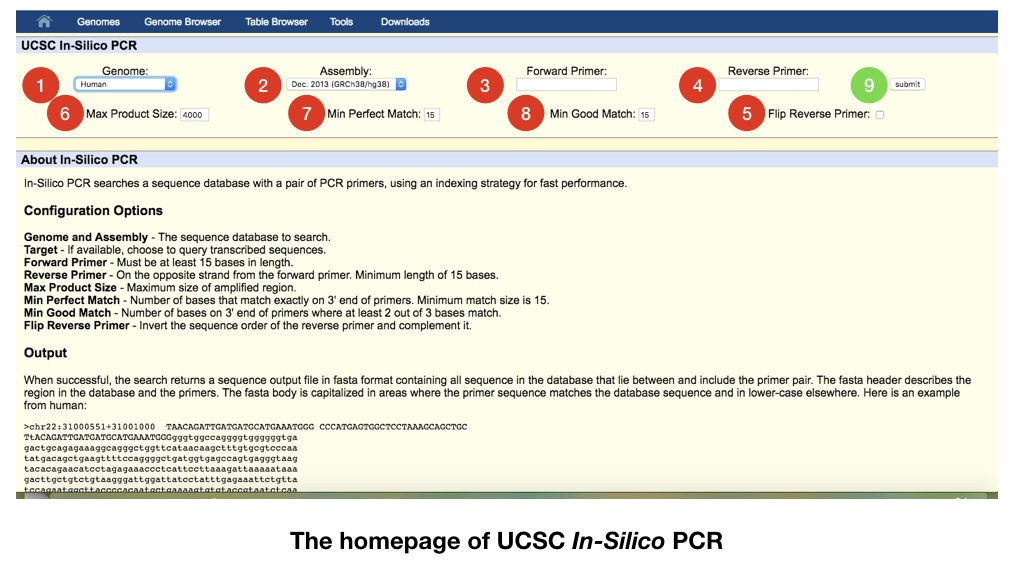 """A comprehensive guide on """"How to do In Silico PCR"""""""