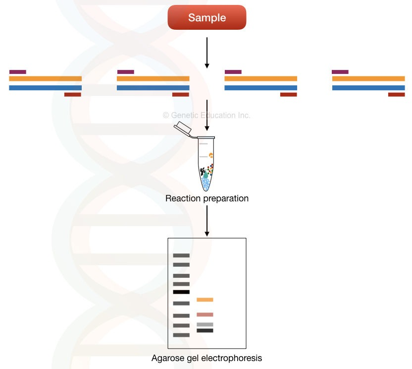 What is a multiplex PCR?
