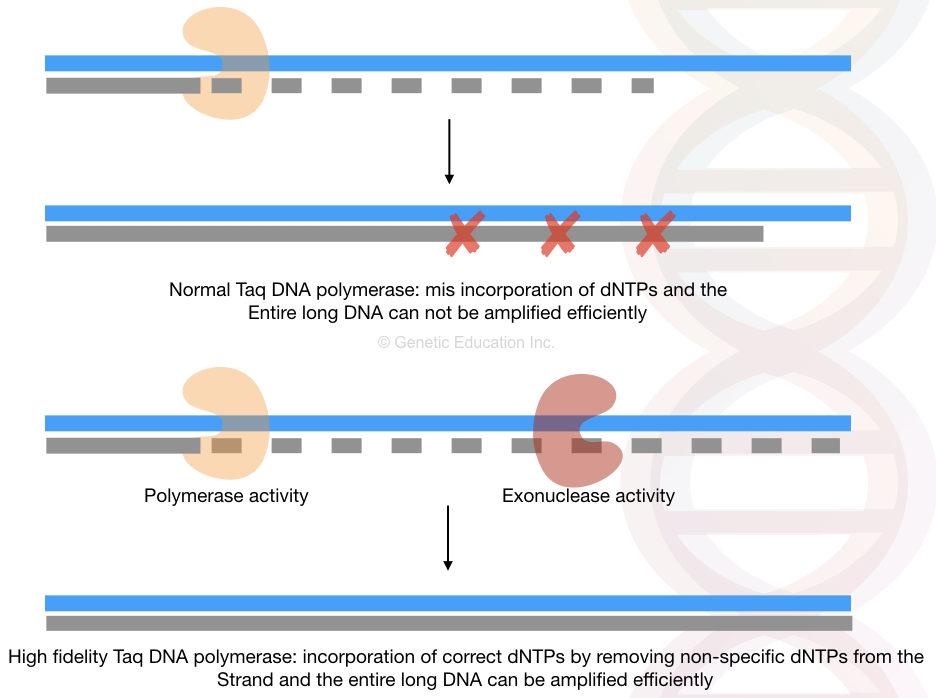 A comprehensive handbook of long-range PCR
