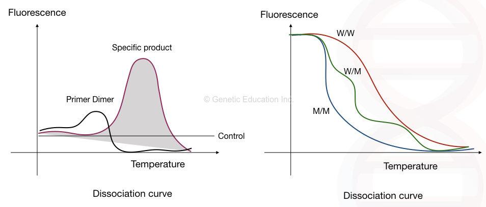 Real-time PCR: Principle, Procedure, Advantages, Limitations and Applications