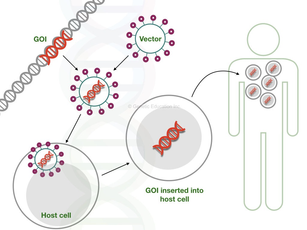 The mechanism of gene therapy
