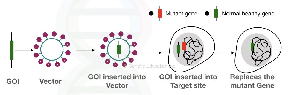 How does gene therapy work?