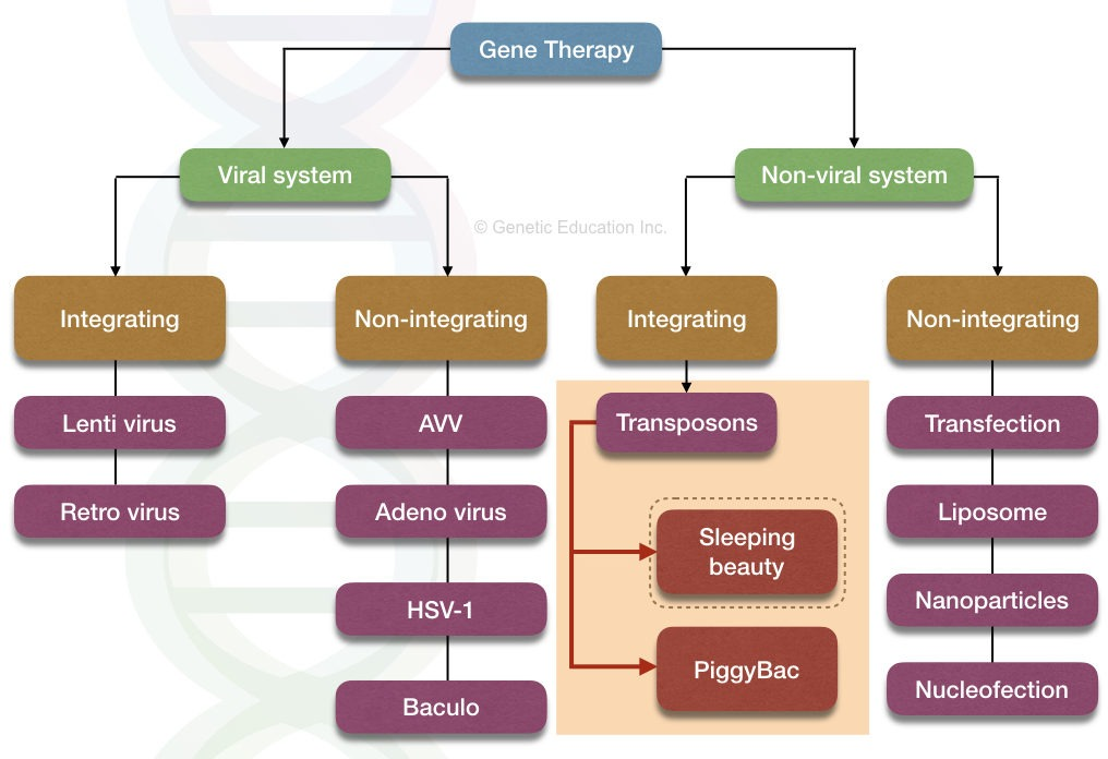 The image shows the viral system and non-viral system of gene therapy