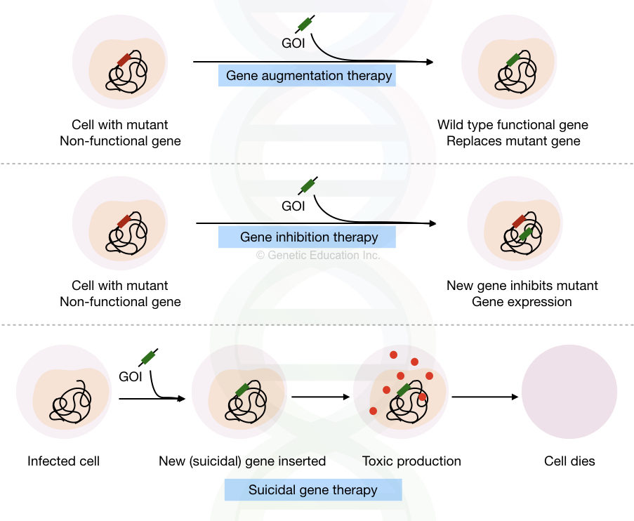 Gene augmentation, gene inhibition and suicidal gene therapy techniques.