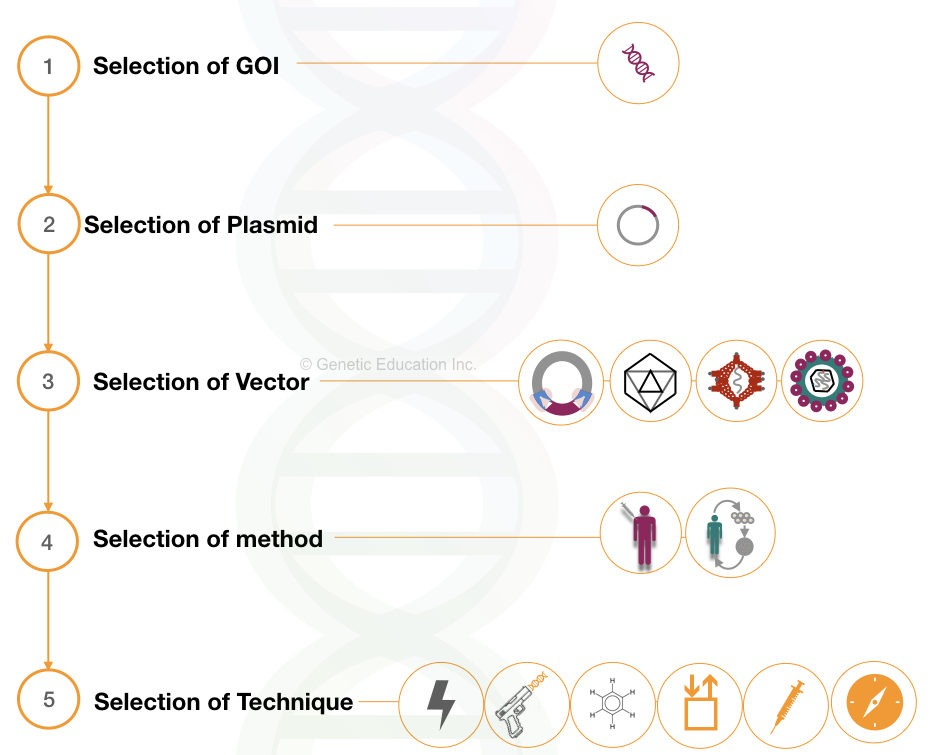 steps in the process of gene therapy