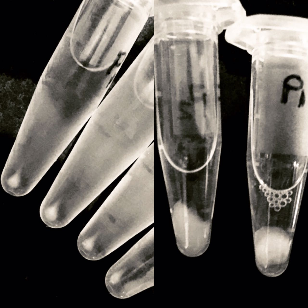 Ethanol precipitated DNA samples.