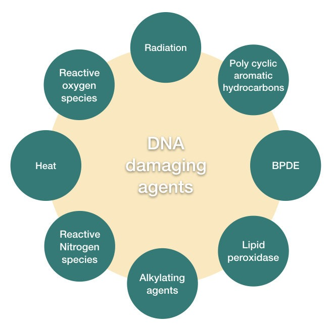 Common DNA damaging agents