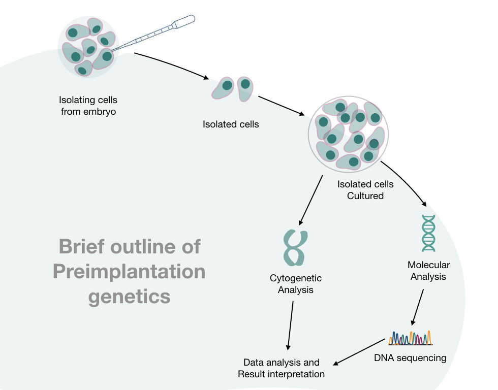 The outline of preimplantation genetic diagnosis process