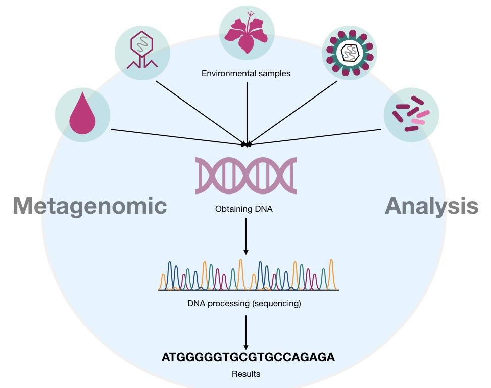 The outline of metagenomics analysis