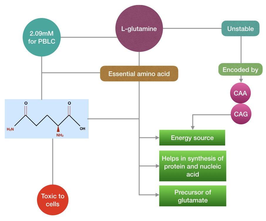 The summary of L-glutamine