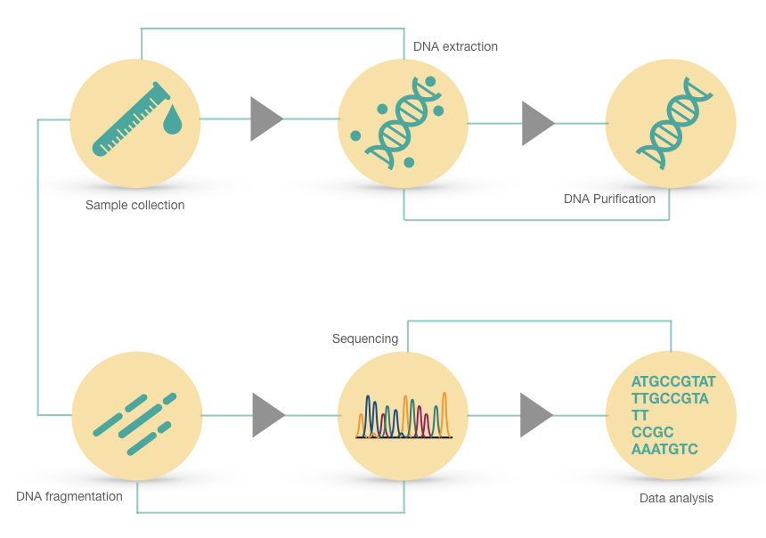 Steps of DNA sequencing