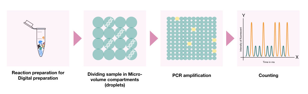 The pictorial illustration of the entire process of digital PCR.