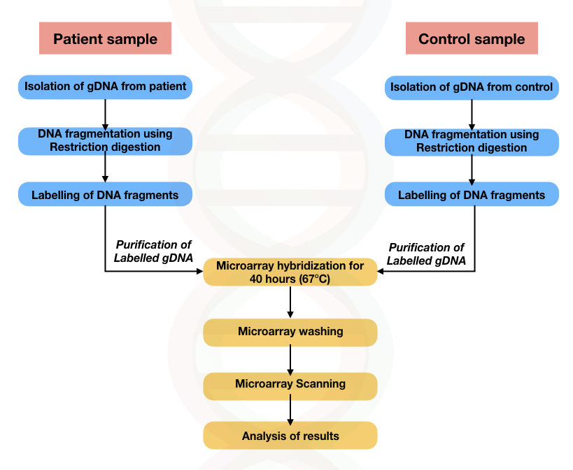 The process of microarray for SNP genotyping.