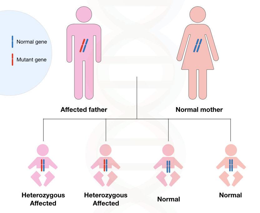 Image 1: graphical illustration of inheritance Huntington's disease.