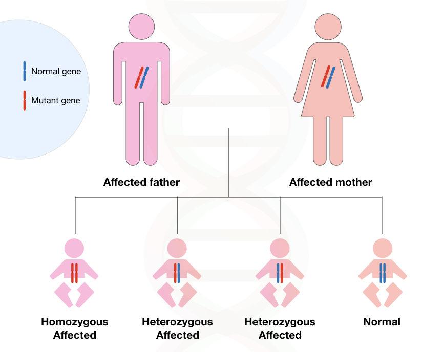 Image 2: graphical illustration of inheritance Huntington's disease.