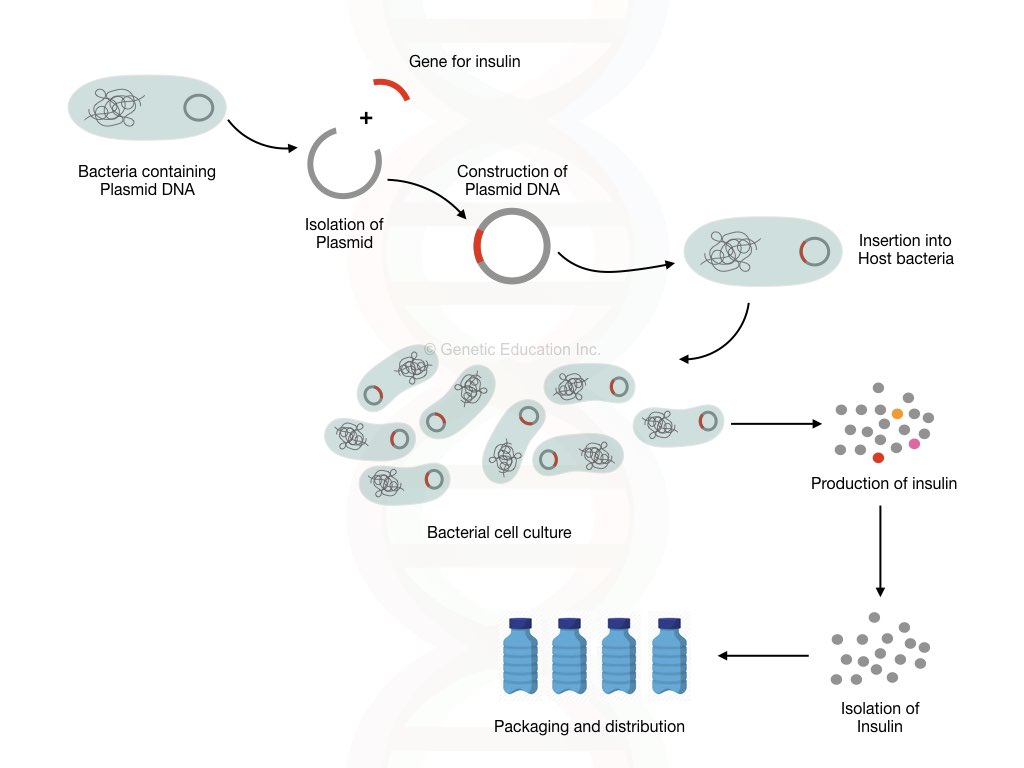 Production of therapeutic protein using the genetic engineering technique.