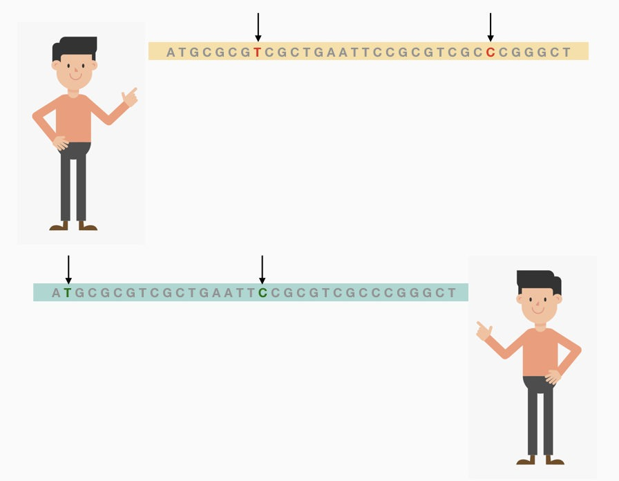 Do Identical Twins Have The Same DNA?