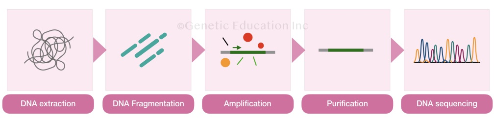 The process of DNA sequencing.