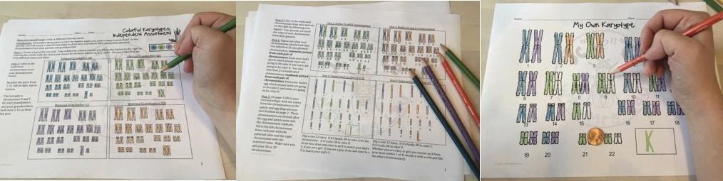 Classroom activities of karyotyping.
