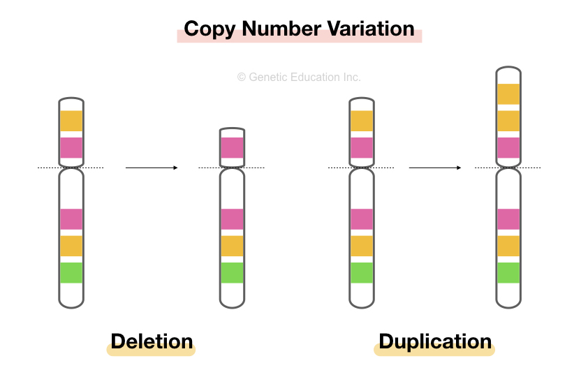 What is Copy Number Variation and How to Detect it?
