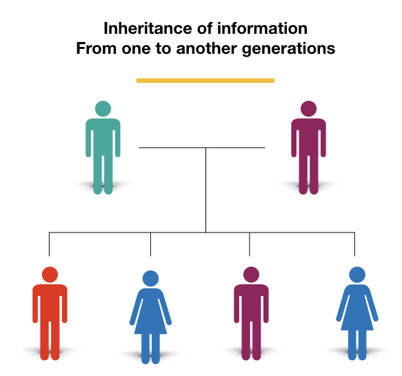 Inheritance of genetic information from one to another generation.