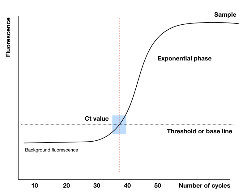 The Ct value, baseline, background signals and exponential phase of the qPCR graph.